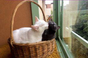 wiele kotów w domu