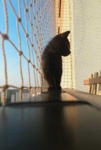 bezpieczeństwo kota