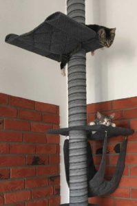 wydatki na kota